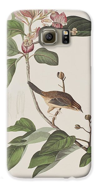 Bachmans Sparrow Galaxy S6 Case by John James Audubon