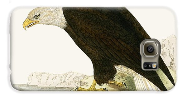 Bald Eagle Galaxy S6 Case by English School
