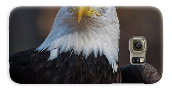 Bald Eagle Looking Right Galaxy S6 Case