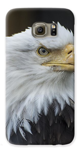 Bald Eagle Portrait Galaxy S6 Case