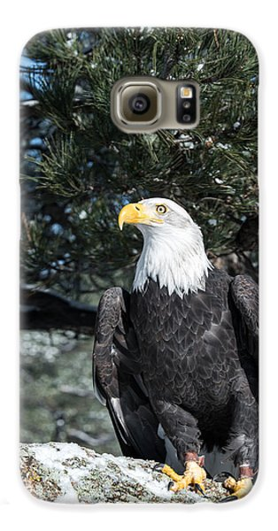 Bald Eagle Ready For Flight Galaxy S6 Case