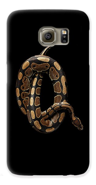 Ball Or Royal Python Snake On Isolated Black Background Galaxy S6 Case