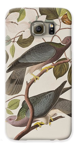 Band-tailed Pigeon  Galaxy S6 Case by John James Audubon