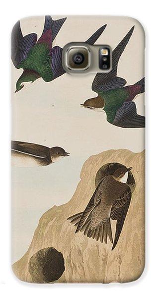 Bank Swallows Galaxy S6 Case by John James Audubon