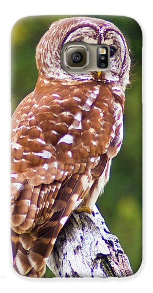 Barred Owl Galaxy S6 Case by Bill Barber
