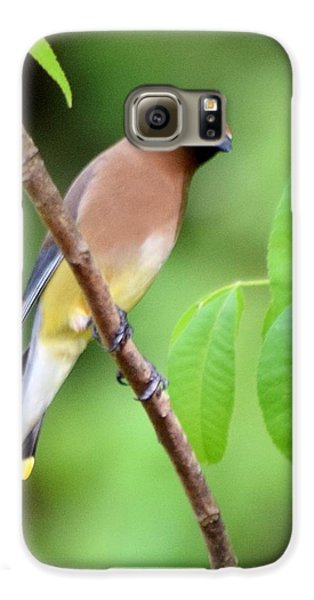 Beautiful Cedar Wax Wing  Galaxy S6 Case by Sheri McLeroy