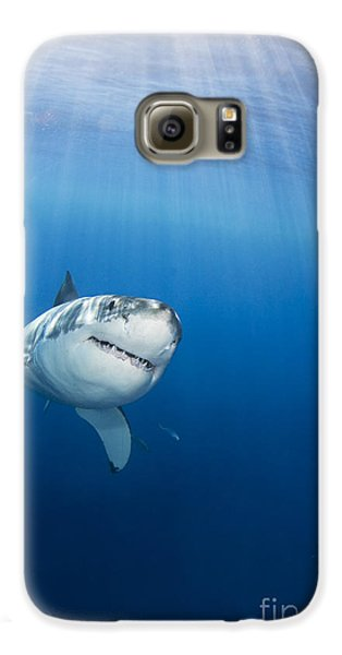 Beautiful Great White Galaxy S6 Case by Dave Fleetham - Printscapes