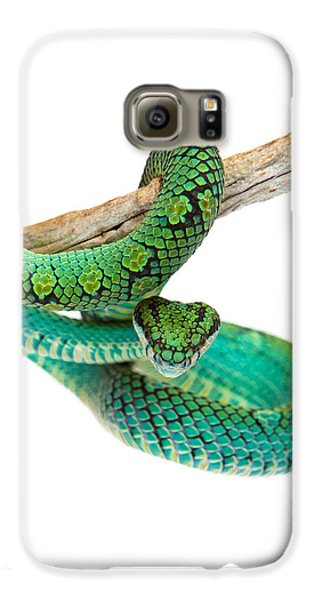 Beautiful Sri Lankan Palm Viper Galaxy S6 Case