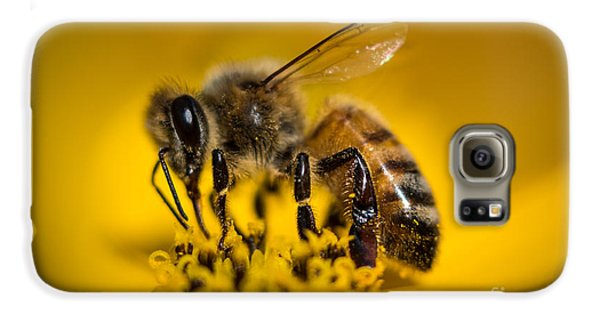 Bee Enjoys Collecting Pollen From Yellow Coreopsis Galaxy S6 Case