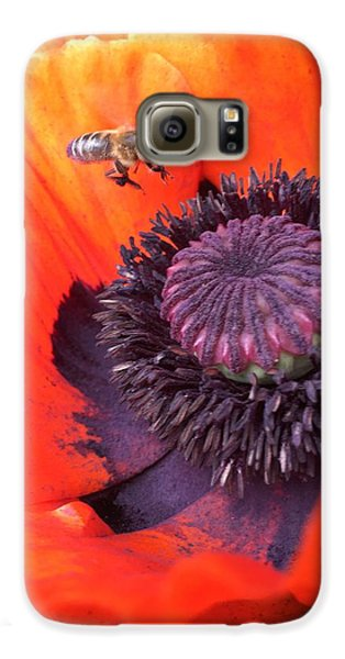 Galaxy S6 Case - Bee Is Visiting A Poppy by Orphelia Aristal