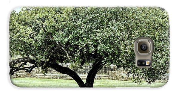 Belize Tree Galaxy S6 Case