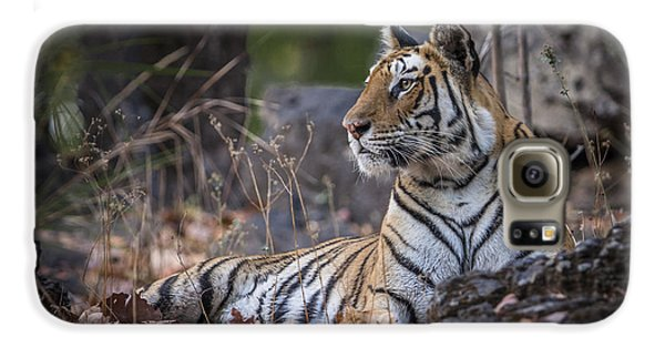 Bengal Tiger Galaxy S6 Case