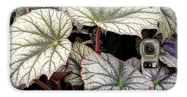 Big Begonia Leaves Galaxy S6 Case by Nareeta Martin
