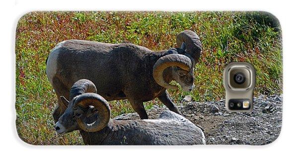 Bighorn Sheep Galaxy S6 Case