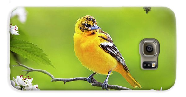 Bird And Blooms - Baltimore Oriole Galaxy S6 Case