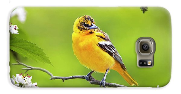 Bird And Blooms - Baltimore Oriole Galaxy S6 Case by Christina Rollo