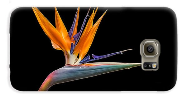 Galaxy S6 Case featuring the photograph Bird Of Paradise Flower On Black by Rikk Flohr