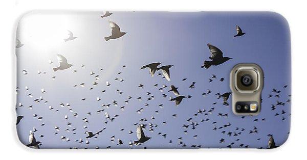 Birds Galaxy S6 Case