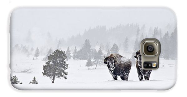 Bison In The Snow Galaxy S6 Case