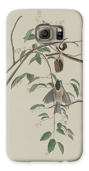 Titmouse Galaxy S6 Case - Black-capped Titmouse by Dreyer Wildlife Print Collections