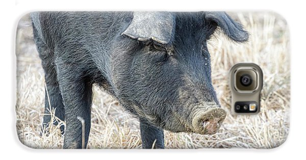 Galaxy S6 Case featuring the photograph Black Pig Close-up by James BO Insogna