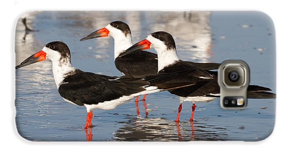 Black Skimmer Birds Galaxy S6 Case