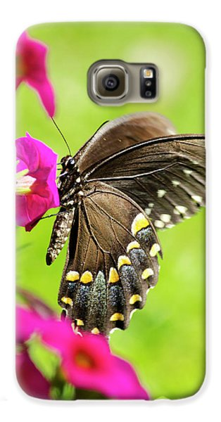 Galaxy S6 Case featuring the photograph Black Swallowtail Butterfly by Christina Rollo