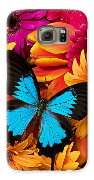 Blue Butterfly On Brightly Colored Flowers Galaxy S6 Case by Garry Gay