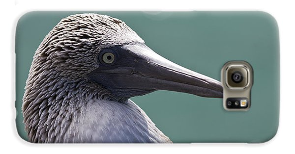 Blue Footed Booby II Galaxy S6 Case by Dave Fleetham