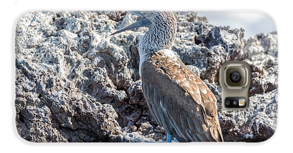 Blue Footed Booby Galaxy S6 Case