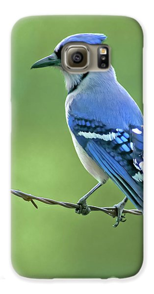 Bluejay Galaxy S6 Case - Blue Jay On The Fence by Robert Frederick