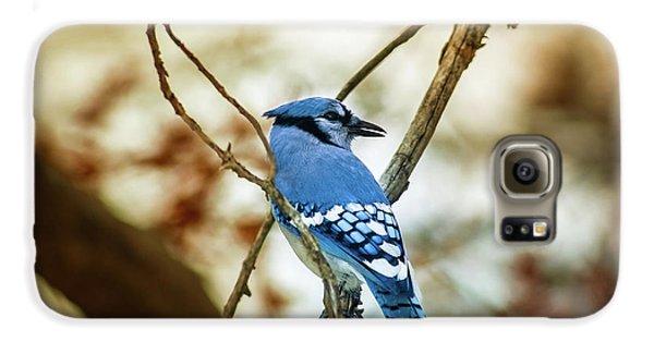 Bluejay Galaxy S6 Case - Blue Jay by Robert Frederick
