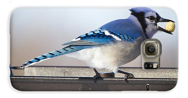 Blue Jay With A Mouth Full Galaxy S6 Case