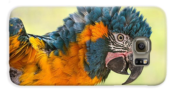 Blue Throated Macaw Galaxy S6 Case