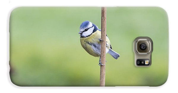 Titmouse Galaxy S6 Case - Blue Tit On A Garden Cane by Tim Gainey