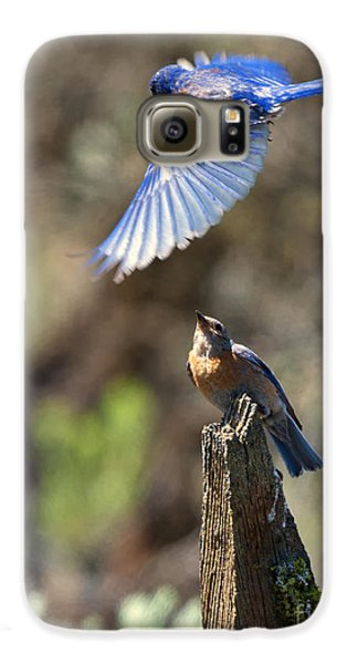 Bluebird Buzz Galaxy S6 Case by Mike Dawson