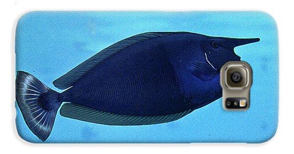 Bluespine Unicorn Fish Galaxy S6 Case