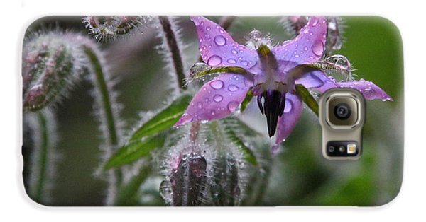 Borage Umbrella Galaxy S6 Case