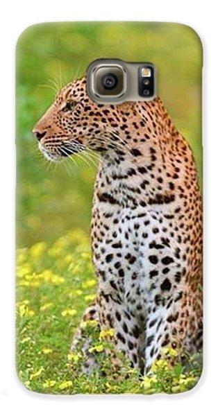 Botswana Leopard  Galaxy S6 Case