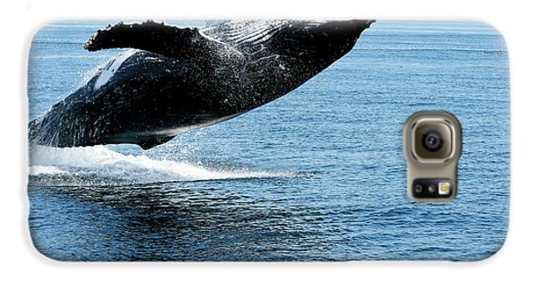 Breaching Humpback Whales Happy-2 Galaxy S6 Case