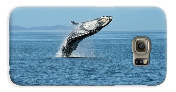 Breaching Humpback Whales Happy-3 Galaxy S6 Case