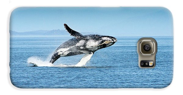 Breaching Humpback Whales Happy-4 Galaxy S6 Case