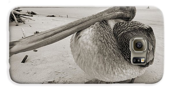 Pelican Galaxy S6 Case - Brown Pelican Folly Beach Morris Island Lighthouse Close Up by Dustin K Ryan