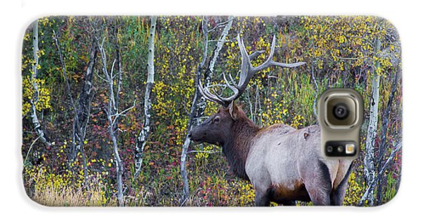 Galaxy S6 Case featuring the photograph Bull Elk by Aaron Spong