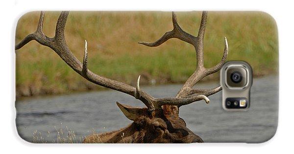 Bull Elk Galaxy S6 Case