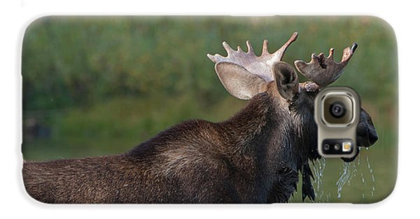 Bull Moose Galaxy S6 Case