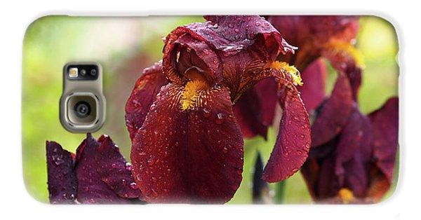 Burgundy Bearded Irises In The Rain Galaxy S6 Case by Rona Black