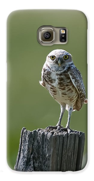 Galaxy S6 Case featuring the photograph Burrowing Owl by Gary Lengyel