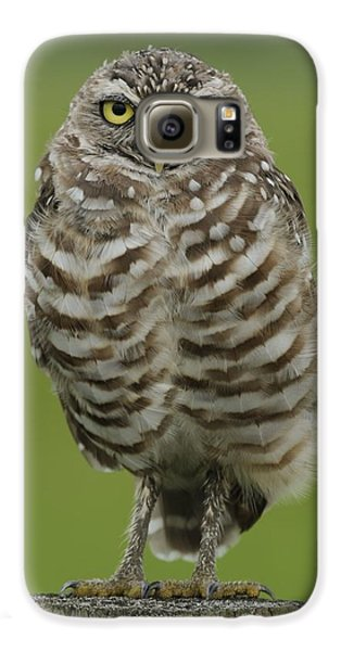 Burrowing Owl Lookout Galaxy S6 Case