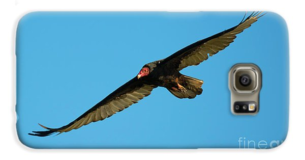 Vulture Galaxy S6 Case - Buzzard Circling by Mike Dawson